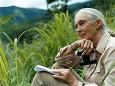 Dame Jane Goodall is the world-renowned conservationist and primatologist in the she made history with through her groundbreaking study on the chimpanzees of the Gombe, in Tanzania. Jane Goodall, Guest Speakers, Expo 2015, Chimpanzee, Wildlife Conservation, Upcoming Events, How To Do Yoga, People Like, My Idol