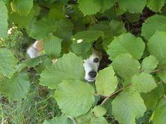 by Chiara Charlie tra le foglie