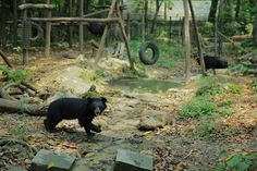 The Bear Rescue Center is a great activity at the Kuang Si Waterfalls in Luang Prabang, Laos!   Email info@laos-adventures.com for more information on booking a tour with us.