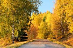 ***Sunny autumn evening (Finland) by Tomi Tenetz