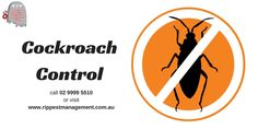 is an integrated pest management industry leader offering effective pest control services in Northern Beaches, Narrabeen & North Shore. Cockroach Control, Integrated Pest Management, Pest Control Services, North Shore, Hue