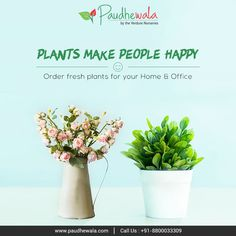 #PlantTips Plants Make People Happy  Order Fresh Plants for your Home & Office Buy from Paudhewala, Pay online or COD Visit us at www.paudhewala.com, call us: +91-8800033309 #Paudhewala #noidanursery #faridabadnursery #planttips #FreshPlants Big Plants, Plant Nursery, Garden Accessories, Nurseries, Cod, Seeds, Planters, Fresh, Happy