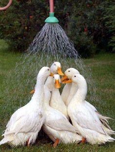 Dusche!!!                                                                                                                                                                                 Mehr
