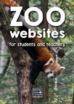A Collection of Zoo Websites...there is SO much great stuff on zoo websites...this post puts them all in one place for you!