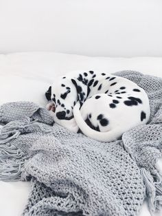 Dalmatian sleeps on a cozy blanket. - Dalmatian sleeps on a cozy blanket. Cute Puppies, Cute Dogs, Dogs And Puppies, Doggies, Funny Dogs, Animals And Pets, Baby Animals, Cute Animals, Sleeping Dogs