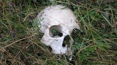 A skull damaged by vultures on the Sky Burial field. This was very small, possibly a child's. Photo caption and credit: Liam Holly