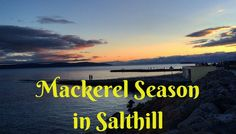 Mackerel Season in Salthill Mackerel Fish, Ireland, Things To Do, Seasons, Beach, Water, Blog, Outdoor, Things To Make