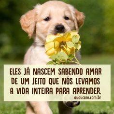 Amo demais!!! #regram @auau_care #frases #amorincondicional #cachorro #auaucare