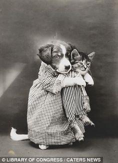 котики фото 20 век