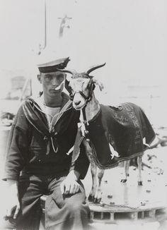 "reallyawesomecostumes: ""Goat mascot of HMS Irresistible """