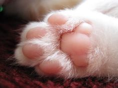 Love cats paws ♥