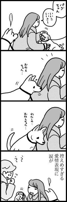 Funny Photos, Cool Photos, Shiba Inu, Photo Art, Dog Cat, Manga, Humor, Comics, Cats