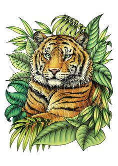 Endangered Animals series Sumatran Tiger by LyndseyGreen on Etsy