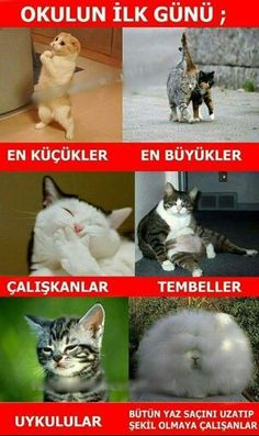23 Caps Describing Day of School Opening- Okulların Açıldığı Günü Birebi Funny Shit, Funny Memes, Hilarious, Animal Jokes, Funny Animals, Cute Animals, Gatos Cat, Comedy Pictures, Haha