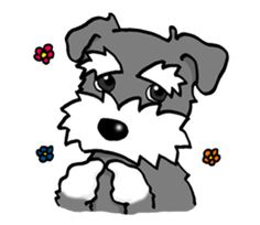 Emotional and cute Miniature Schnauzer brings more color to your conversation!