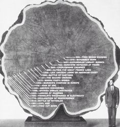 As we prepare for Milan Design Week we're exploring all the raw materials that inspire inform and shape our designs. This week is all about WOOD. It's easy to forget but each bit of wood is not only unique but often has a longer history than any of us - this monster redwood witnessed over a thousand years #materiality #wood #inspiration #salonedelmobile #fuorisalone #milan #milandesignweek #rotondadellabesana #museodeibambinidimilano by tomdixonstudio