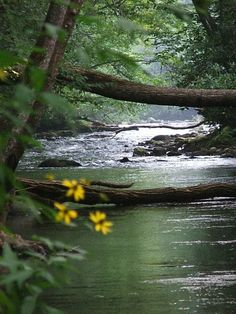 (Open rp) I walk cautiously across the narrow log that creates a passageway through the forest. Suddenly, my dress snags on a tree limb and I begin falling into the stream until you grab my arm.