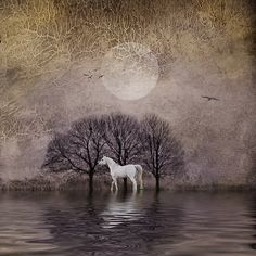 white horse in the moonlight by boobooetmoi
