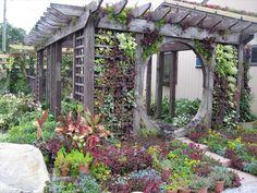 Cliffords Perennial & Vine - Green Walls - Photo Gallery