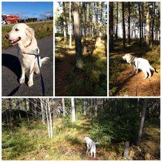 Dogwalking in Norway :)