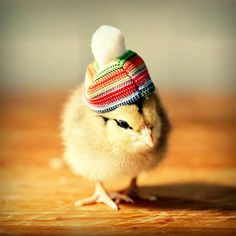 Chicks in Hats Magnet by chicksinhats on Etsy