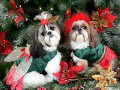 Shih Tzu Breed Christmas Card by furkids3 on Etsy, $3.00
