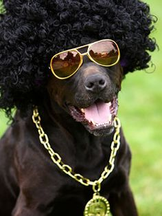 pet costumes - Google Search