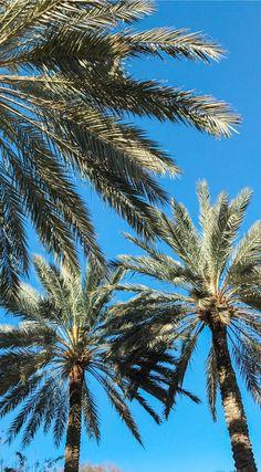 Florida blue skies, palm trees, and sunshine | A romantic weekend getaway in Orlando at the Loews Portofino Bay Hotel at Universal Orlando | Beautiful water at sunset | Best hotels in Orlando | Universal Orlando vacation tips | Romantic travel tips | Orlando, Florida travel guide | Florida travel blogger Ashley Brooke Nicholas | #LoewsPortofinoBay