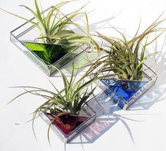 Stained Glass Terrariums - 3 Sizes - Simple, Geometric, Modern - Choose your Color NANCY STYLES njsty Glass 3 Stained Glass Air Plant Holders - Sconce - 3 Sizes - Simple, Geometric, Modern - Choose your Colors This listing is for one air plant ho Stained Glass Flowers, Stained Glass Art, Mosaic Glass, Fused Glass, Glass Planter, Glass Terrarium, Terrariums, Diy Terrarium, Stained Glass Projects