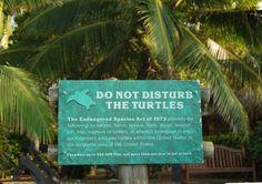 Do not disturb the turtles Kohala Coast, Endangered Species, Big Island, Turtles, United States, Vacation, Tortoises, Vacations, Turtle