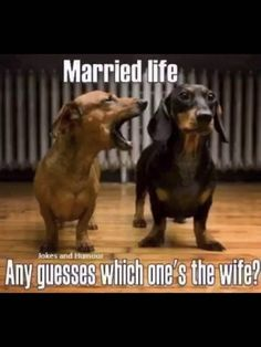 15 Things Only Dachshund Lovers Can Relate To. 5 Will Crack You Up! - Page 5 of 15 - Barmy Pets dachshund crafts, puppies funny quotes, wirehaired dachshund Wife Memes, Wife Humor, Dog Humor, Wife Quotes, Funny Shit, Funny Memes, Funny Stuff, Funny Quotes, It's Funny