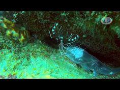 Ao Nang Krabi Scuba Diving