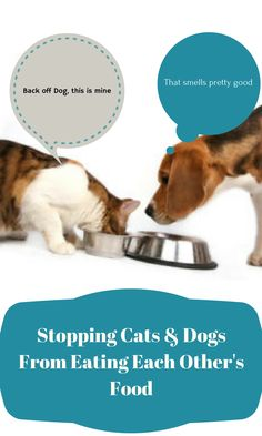 It's challenging when your cat and dogs enjoy eating each other's food. This can create problems for cat health, however, if left unchecked.