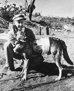 "Iwo Jima: War Dogs Can ""Take It."" ""King"" wasn't mentioned in casualty lists from Iwo Jima. But if a dog deserves honorable mention, it is ""King"". A German Shepherd, this heroic war dog suffered eight shrapnel wounds in the heavy fighting here. Bandaged at a first aid station, ""King"" continued to do his duty. He is shown with Marine Private Steven Hruby."