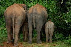 Yala National Wildlife Park, Sri Lanka#Travel Eat Drink Like a Local