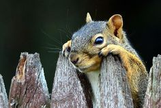 Surprise! by d90dewey - on Flickr.