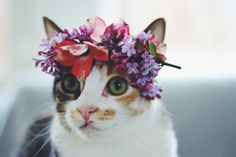 Adorable kitty flower crown. I know my kitty would never stay still long enough to take this adorable photo! via Tumblr - source: youngeyesignite