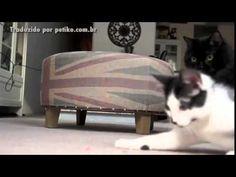 Como apresentar 2 gatos um ao outro