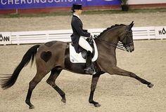 Dressage horse heart