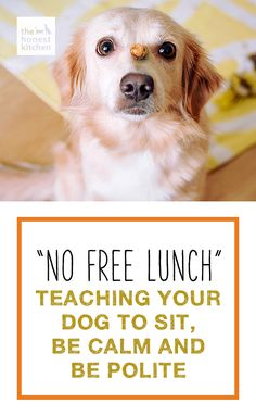Teaching your dog to sit, be calm and polite.