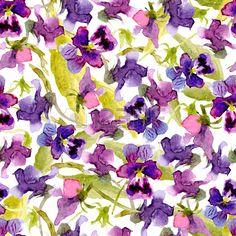 Vector acquerello sfondo trasparente di viole del pensiero Archivio Fotografico