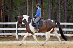 Image result for horses in training
