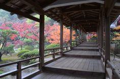 2013/ 11/25  嵐山 大覚寺