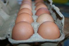 IMG_6796+eggs.jpg (1600×1066)