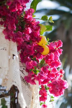 Bougainvillea from my garden for the Chuppah