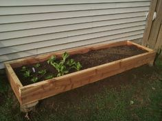 Raised garden beds out of wood pallets.