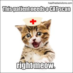 This patient needs a CAT scan, right meow! Right Meow! Radiology Humor, Medical Humor, Nurse Humor, Crazy Cat Lady, Crazy Cats, Funny Cute, Hilarious, Funny Stuff, Nursing