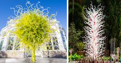 The New York Botanical Garden Presents a Chihuly garden exhibition. The show includes over 20 colorful Chihuly sculptures and installations. Stained Glass Windows, Colored Glass, Botanical Gardens, Art Forms, Sculpting, Glass Art, Sculptures, Artist, Colorful