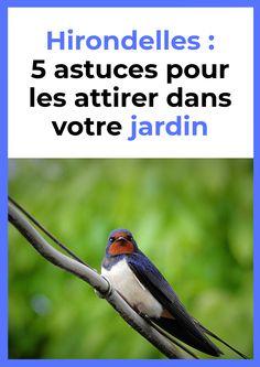 Voici 5 astuces pour attirer les hirondelles dans votre jardin. Garden Deco, Permaculture, Gardening, Garden Design, France, Bird, Voici, Outdoor, Animal