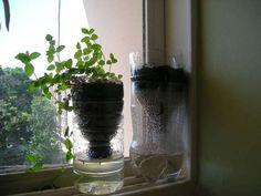 Macetas autorriego... super fàcil y ecològicas que cuidan el medio ambiente y controlar el uso del agua...yo ya tengo varias,,,